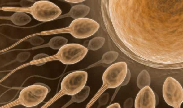Stresin Spermlere Zararı Nelerdir ?
